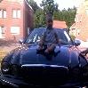 black babyjag