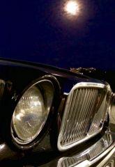 Jaguar by night